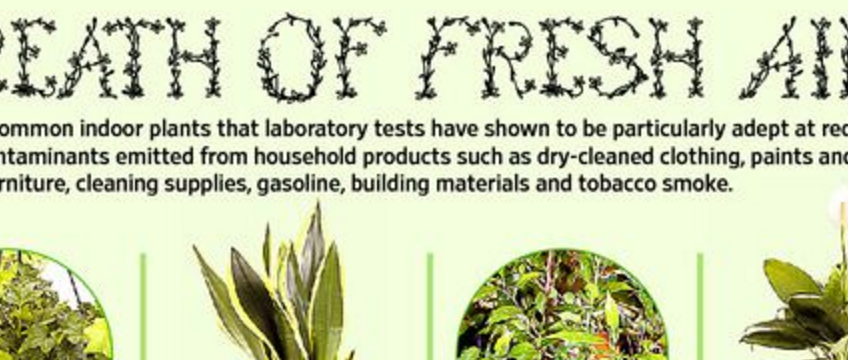 Plants That Purify Your Home