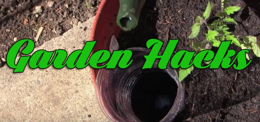 10 Veggie Garden Hacks