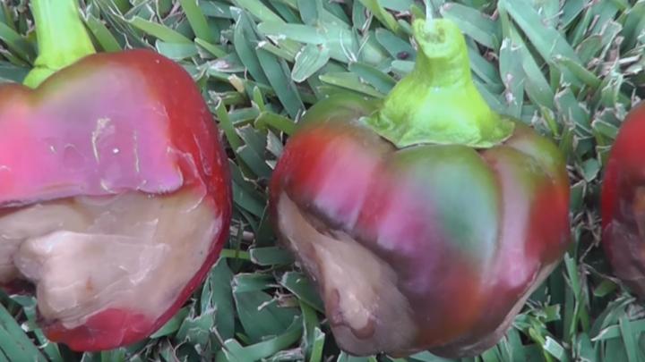 [Video] Avoid these 10 veggie garden pitfalls…