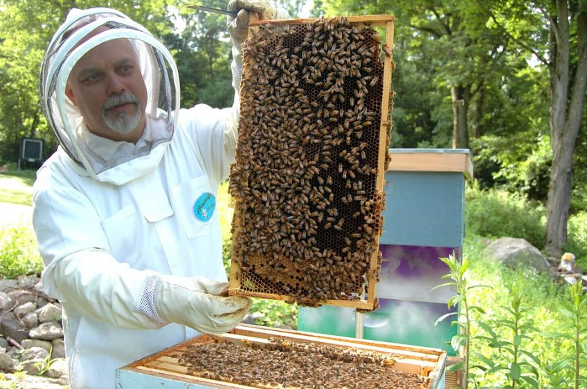 Should You Be a Beekeeper? 3 Questions to Ask First