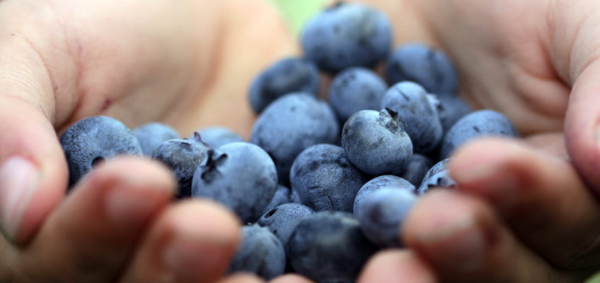 Cheap Superfoods for the Frugal Health Nut