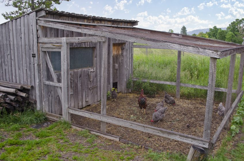 The Ultimate Guide to Chicken Coops (Infograph)