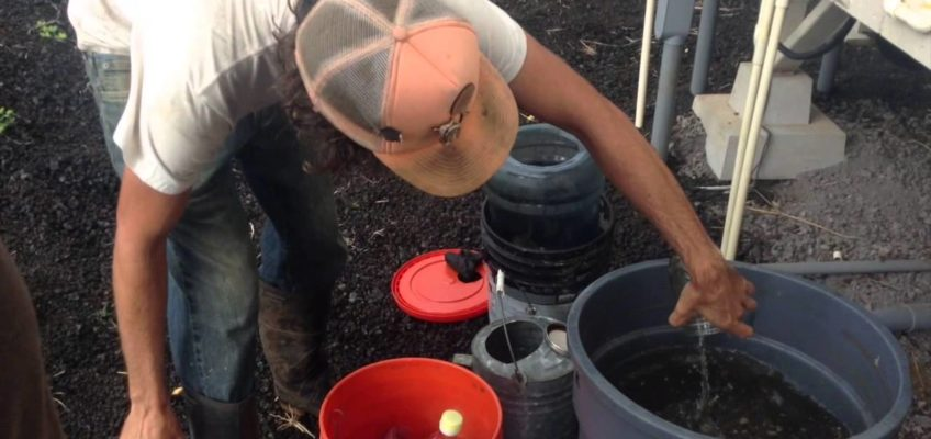 Why You Should Be Making Your Own Compost Tea