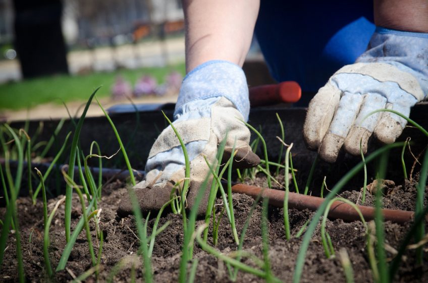 Mistakes to Avoid When Starting a Garden