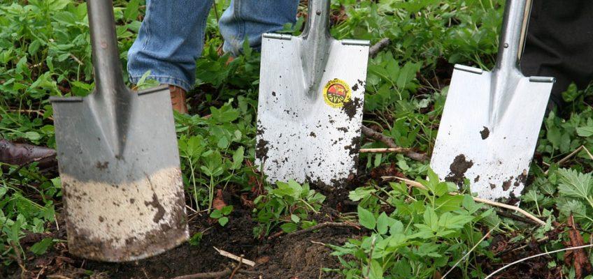 3 Ways to Save Money on Your Garden