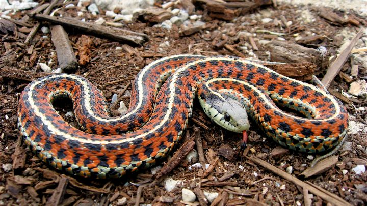 Are Snakes Good for the Garden?