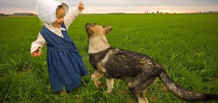 3 Dog Breeds to Consider for Homesteading