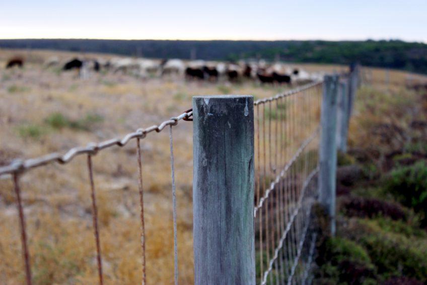 Tips for Stretching Wire Fence - Homesteader DepotHomesteader Depot