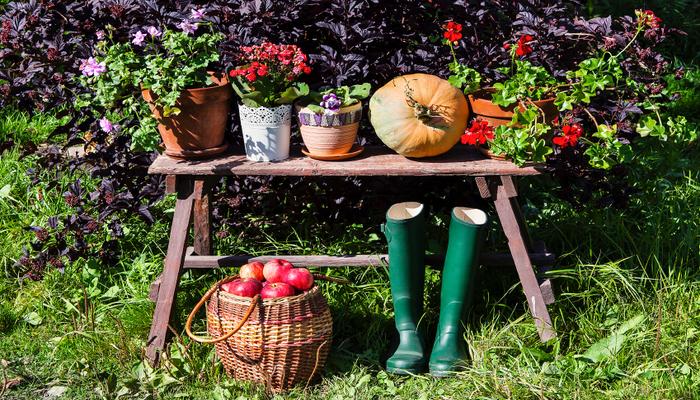 Tips for Fall Gardening
