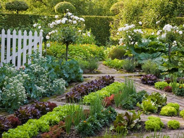 Growing An Edible Garden Landscape