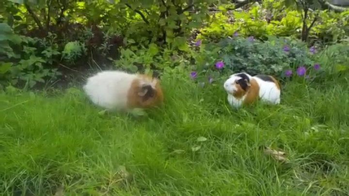Indoor Pets for Your Outdoor Garden