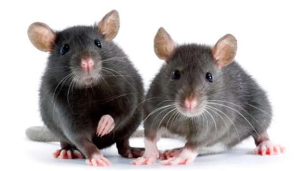 Getting Rid of Mice
