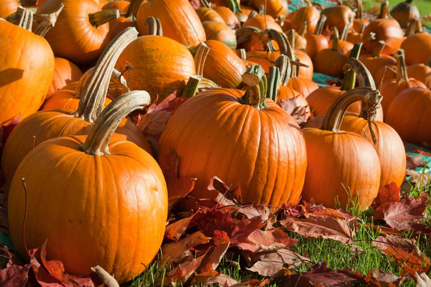 Best Ways to Use a Pumpkin