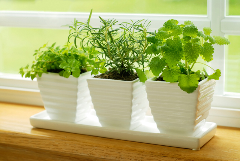 Growing Vegetables and Herbs Indoors