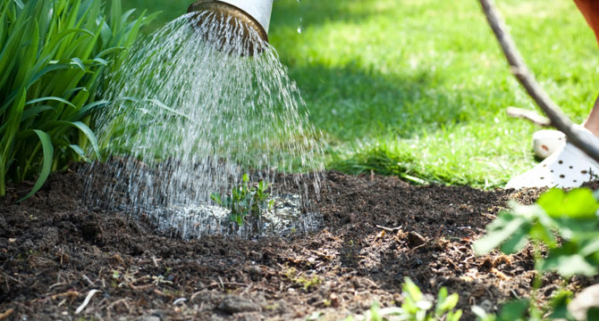 Does Tap Water Kill Garden Bacteria?