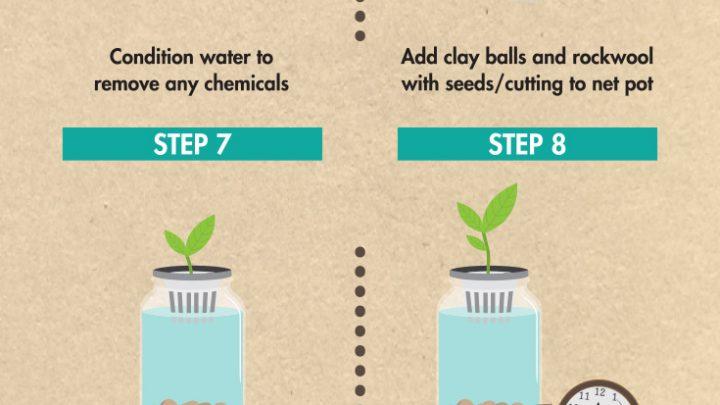 Mason Jar Aquaponics (Infographic)