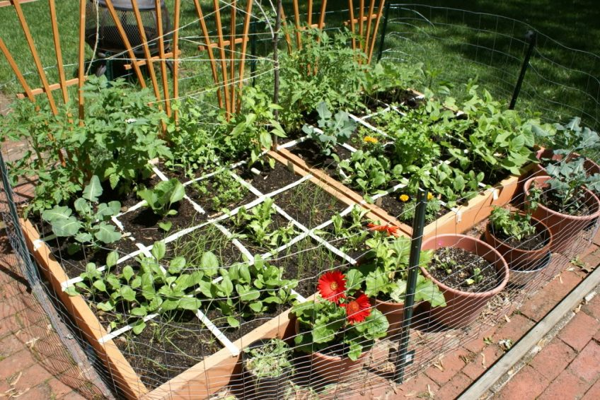 Tips to Save Money in the Garden
