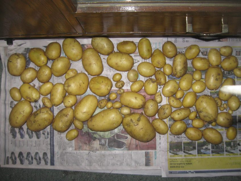 How (And Why) To Cure Potatoes Before Storing Them
