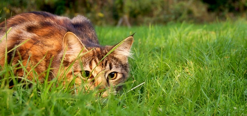 Cats as Pest Control on the Homestead