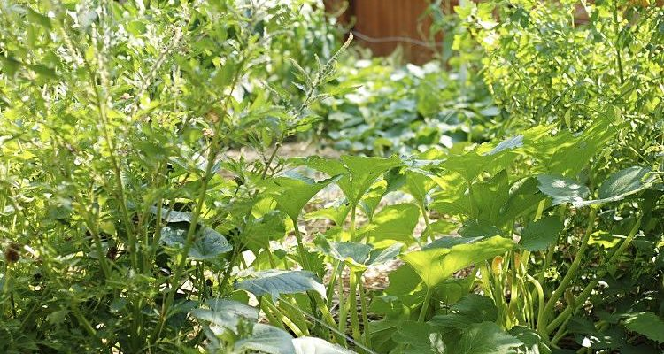 How to Plant a Hidden Survival Garden