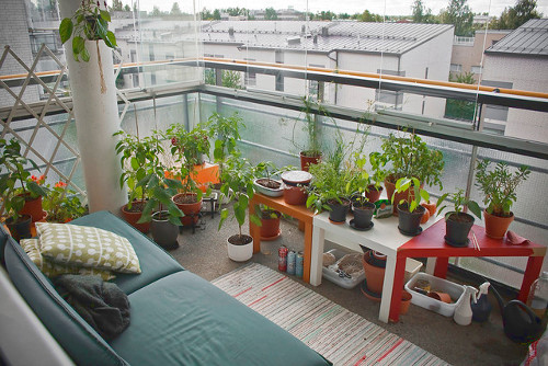 How to Homestead When You Live in An Apartment - Homesteader ...