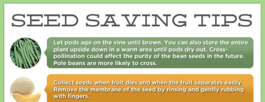 Seed Saving Tips (Infographic)