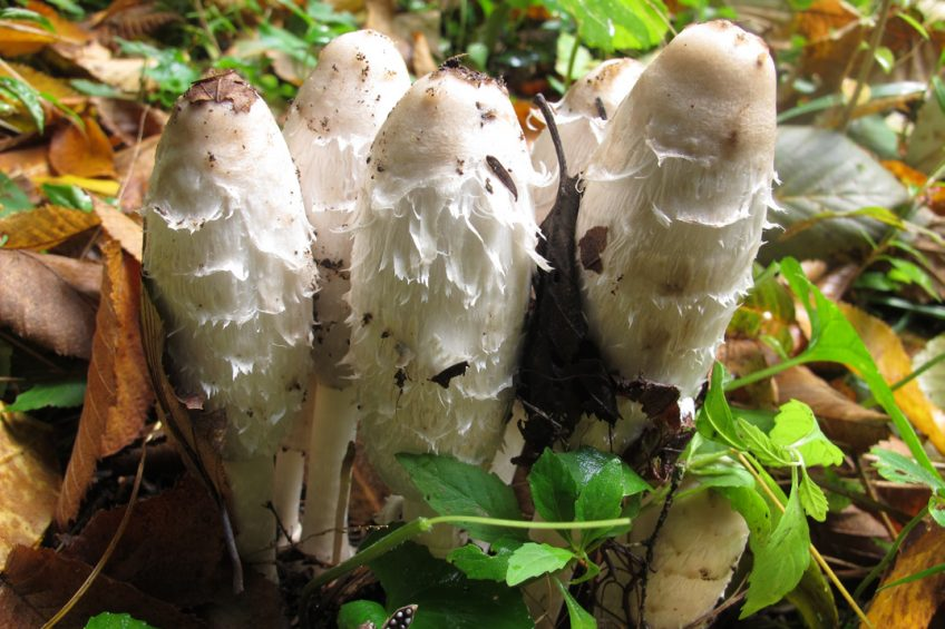 Mushroom Foraging for Beginners