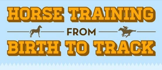 How to Train Horses (Infographic)