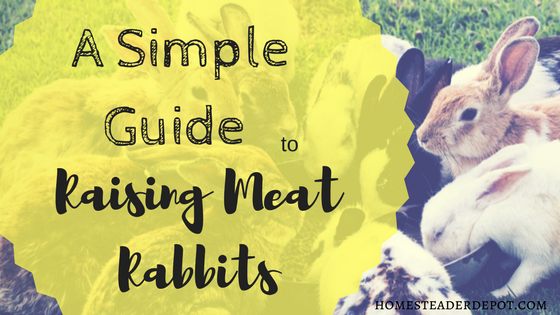 A Simple Guide to Raising Meat Rabbits