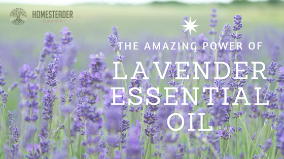 The Amazing Power of Lavender Essential Oil