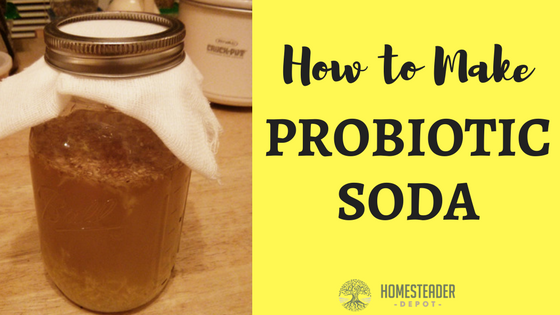 Fermented Probiotic Soda Recipe