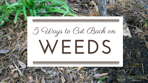 5 Ways to Cut Back on Weeds