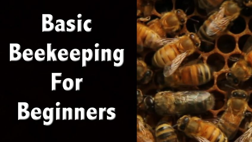 A Simple Guide to Starting a Beehive (Video)