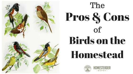Pros and Cons of Birds on a Homestead