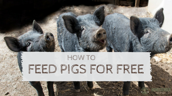 How to Feed a Pig for Free