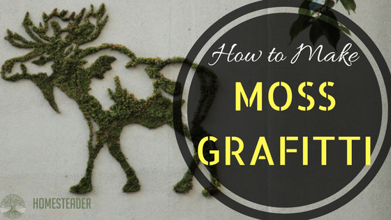 How to Make Moss Grafitti