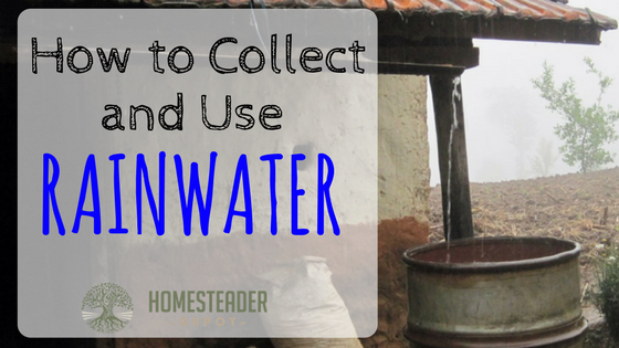 How to Catch and Use Rainwater