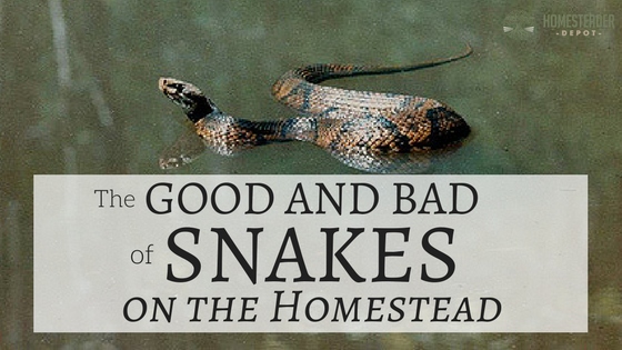 The Good and Bad of Snakes on the Homestead