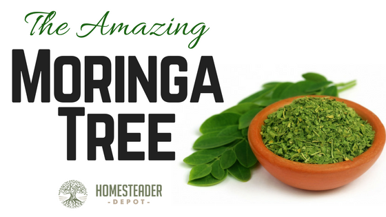 The Amazing Moringa Plant