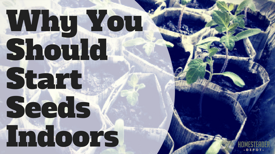 Why Start Seeds Indoors?