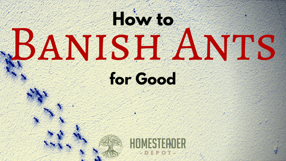 How to Permanently Get Rid of Ants