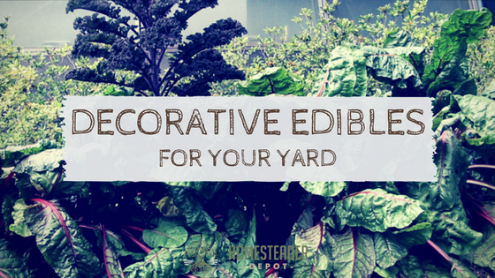 Most Decorative Edibles for Your Yard