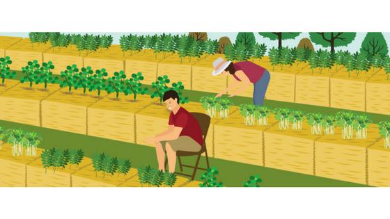 Straw Bale Gardening (Inforgraphic)
