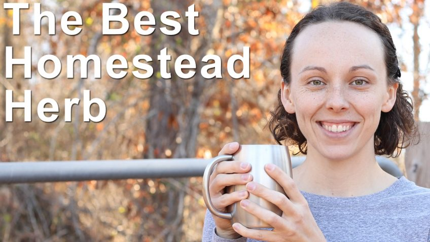 The Best Homesteading Herb (Video)