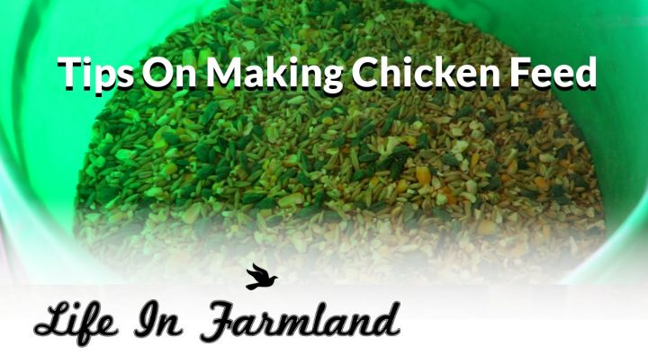 Making Chicken Feed: Pros and Cons (Video)