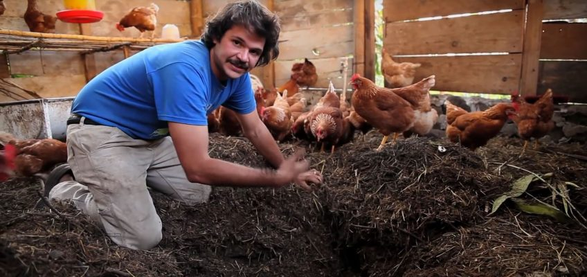 Composting Chicken House (Video)