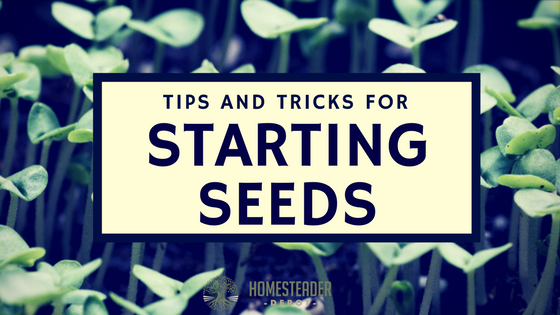 Tips and Tricks for Starting Seeds
