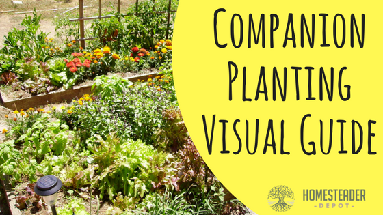 Companion Planting Visual Guide (Infographic)