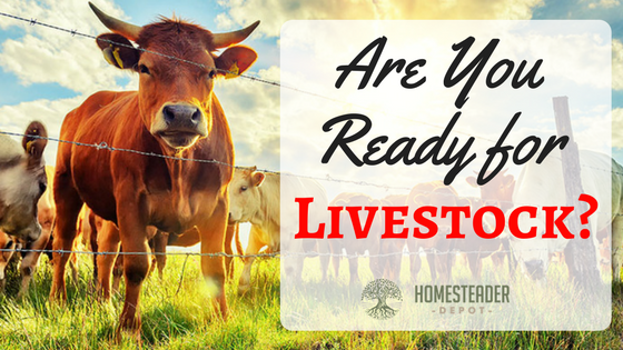 Are You Ready for Livestock?