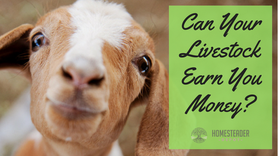Can Your Livestock Make Money for You?